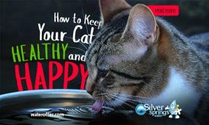 Keep Your Cat Healthy and Happy